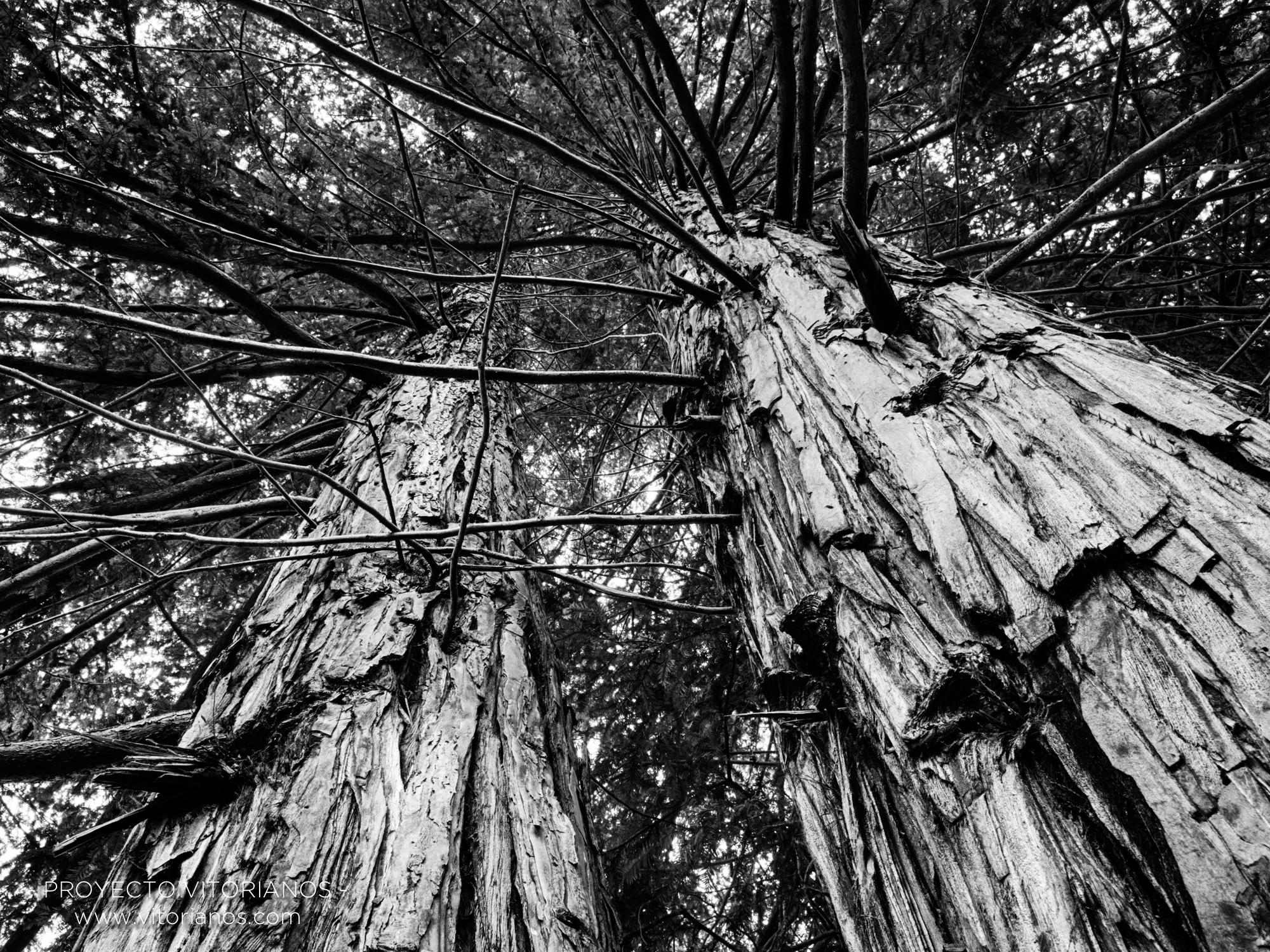 Árboles en el parque de Arriaga - Foto: Juanan Pérez de Cárcamo