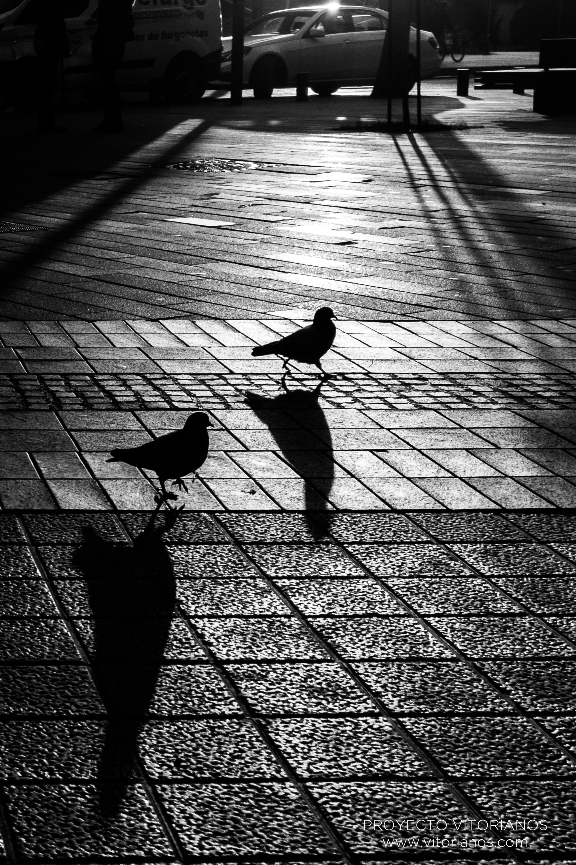 Palomas de paseo - Foto: Sandra Sastre