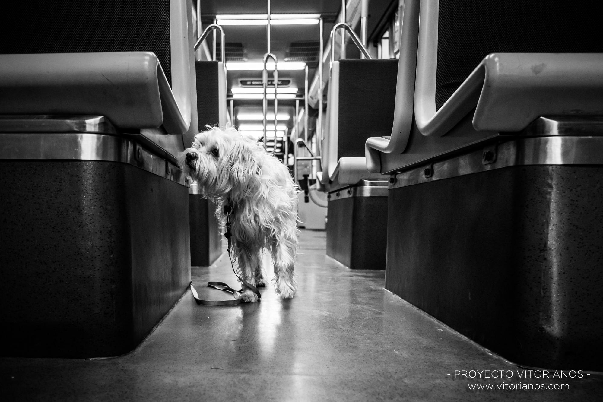 Perro en el tranvía - Foto: Asun Zárate