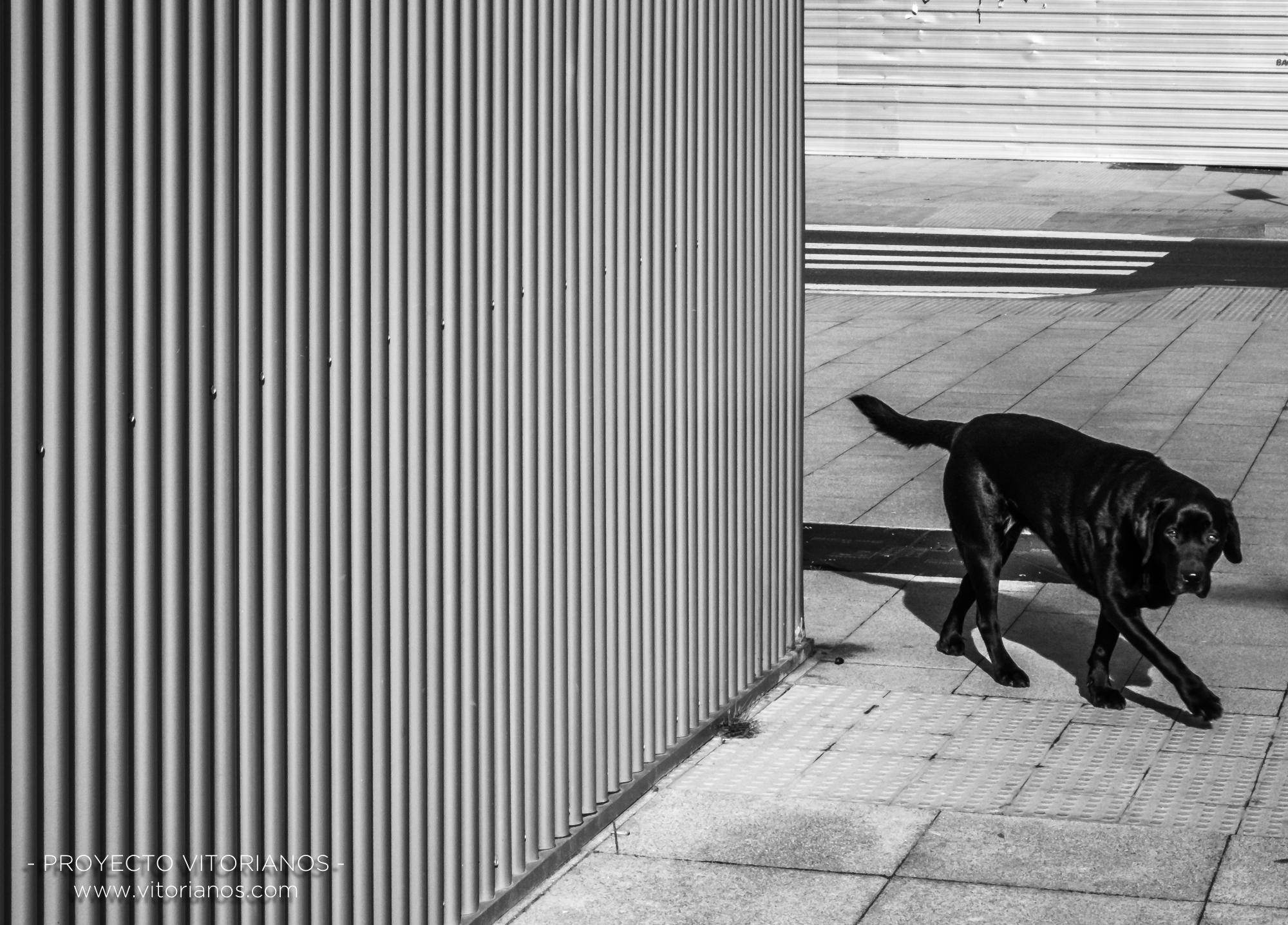 Perro en Zabalgana - Foto: Ana Iglesias