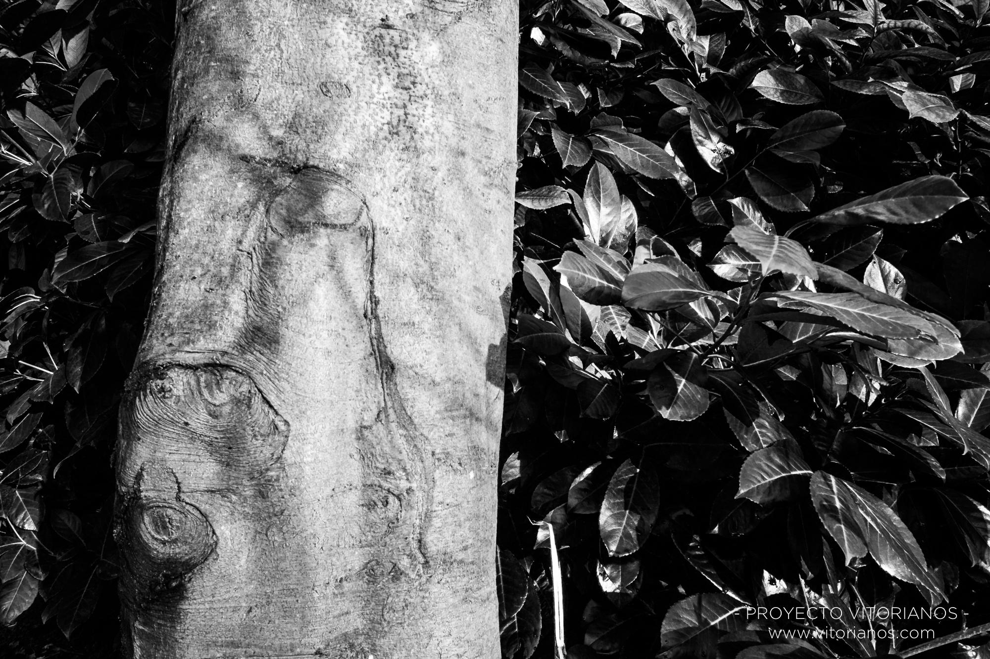 Árbol de La Florida - Foto: Ana Iglesias