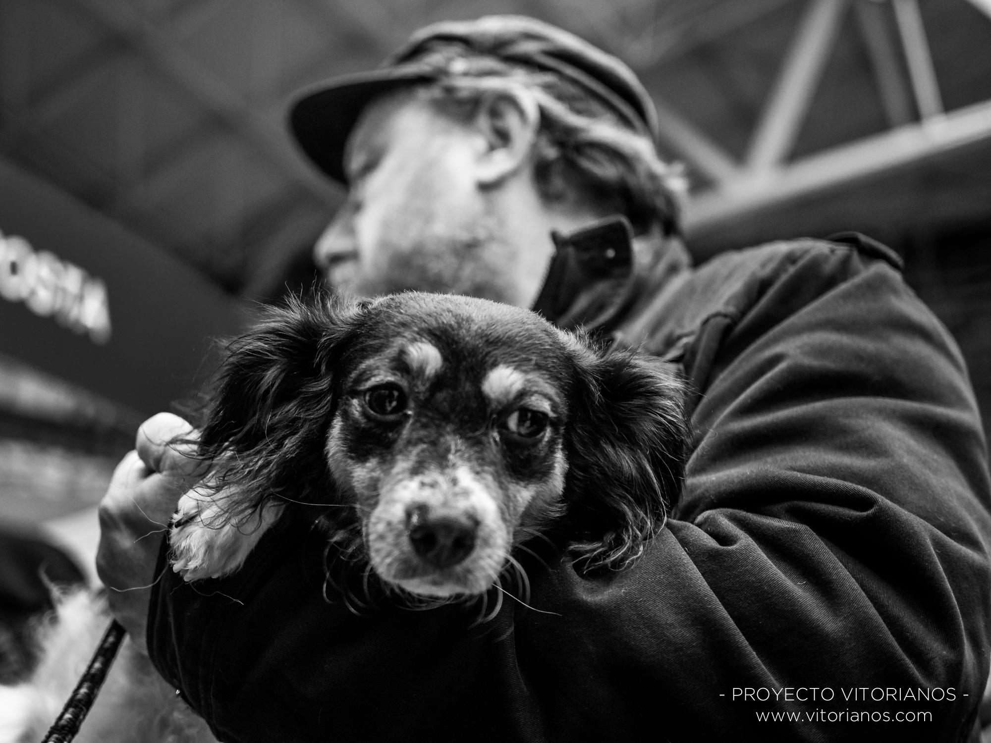 Perro en brazos - Foto: Juanan Pérez de Cárcamo