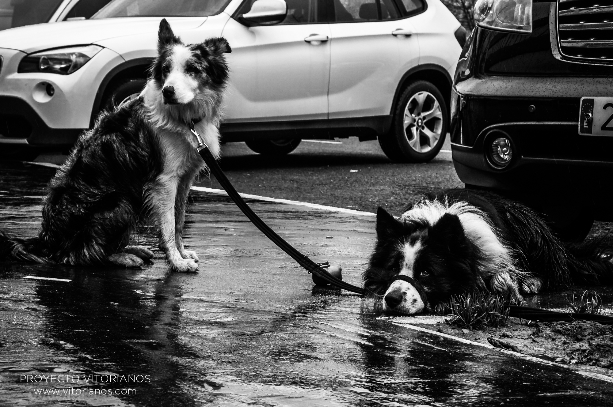 Perros atados - Foto: Manu Moreno