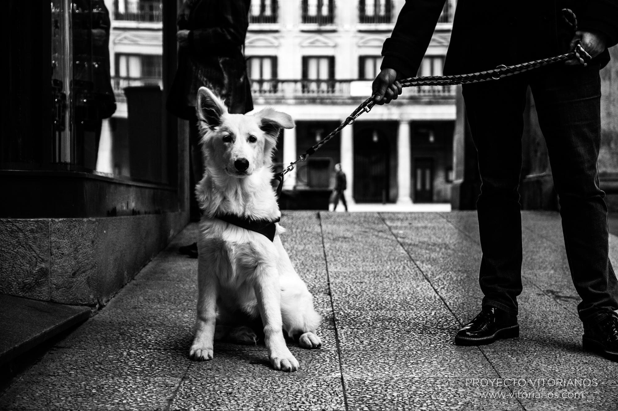 Perro vitoriano - Foto: Marta Parra