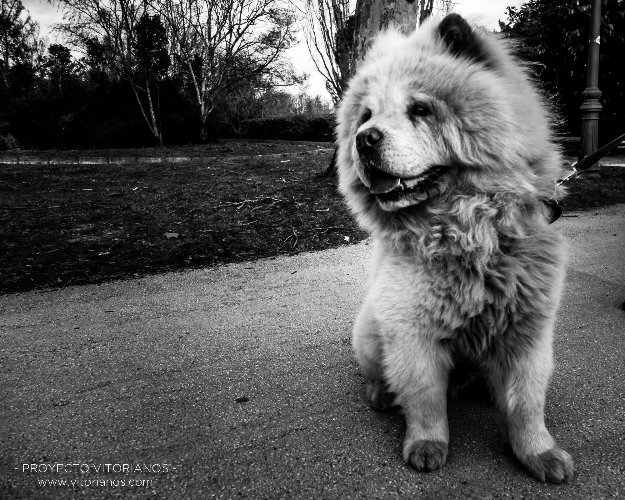 Perro vitoriano - Foto: Sara Ruiz de Austri