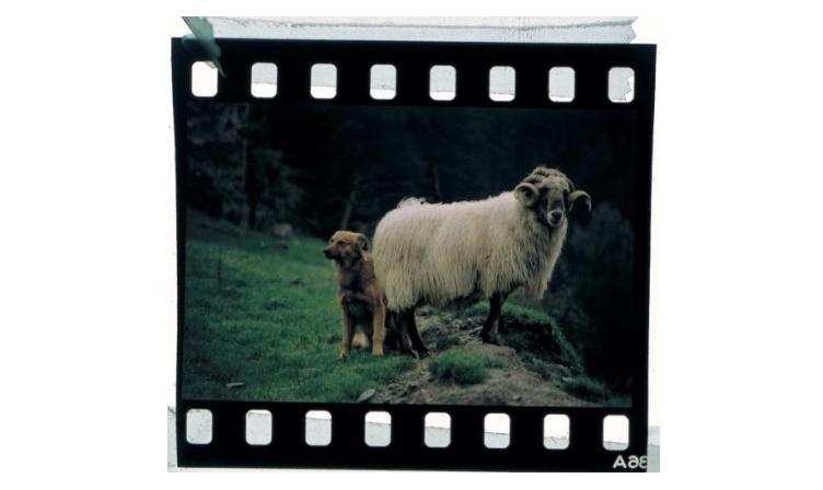 Pastorvasco.com organiza su primer concurso de fotografía