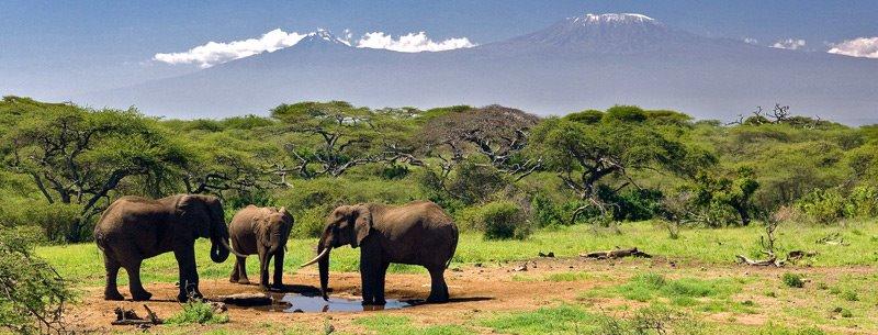 Muere un turista español por acercarse más de la cuenta a fotografiar a un elefante