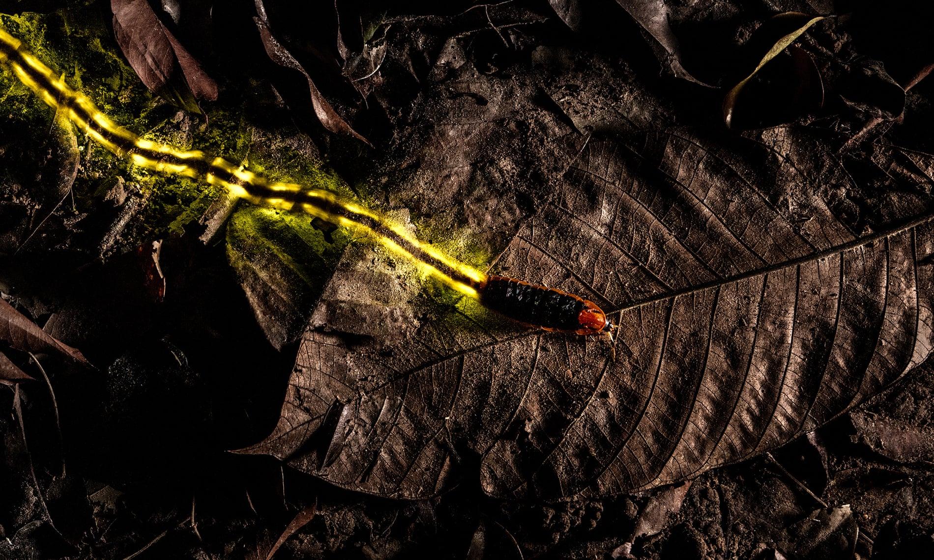 84 fotones de naturaleza salvaje en Ataria